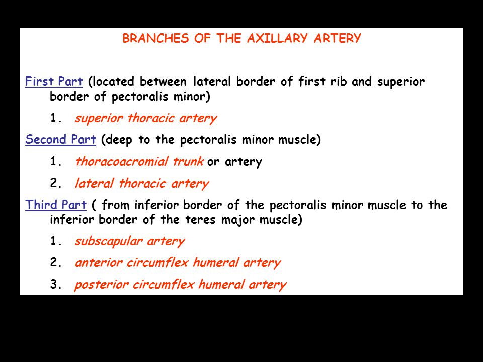 BRANCHES OF THE AXILLARY ARTERY