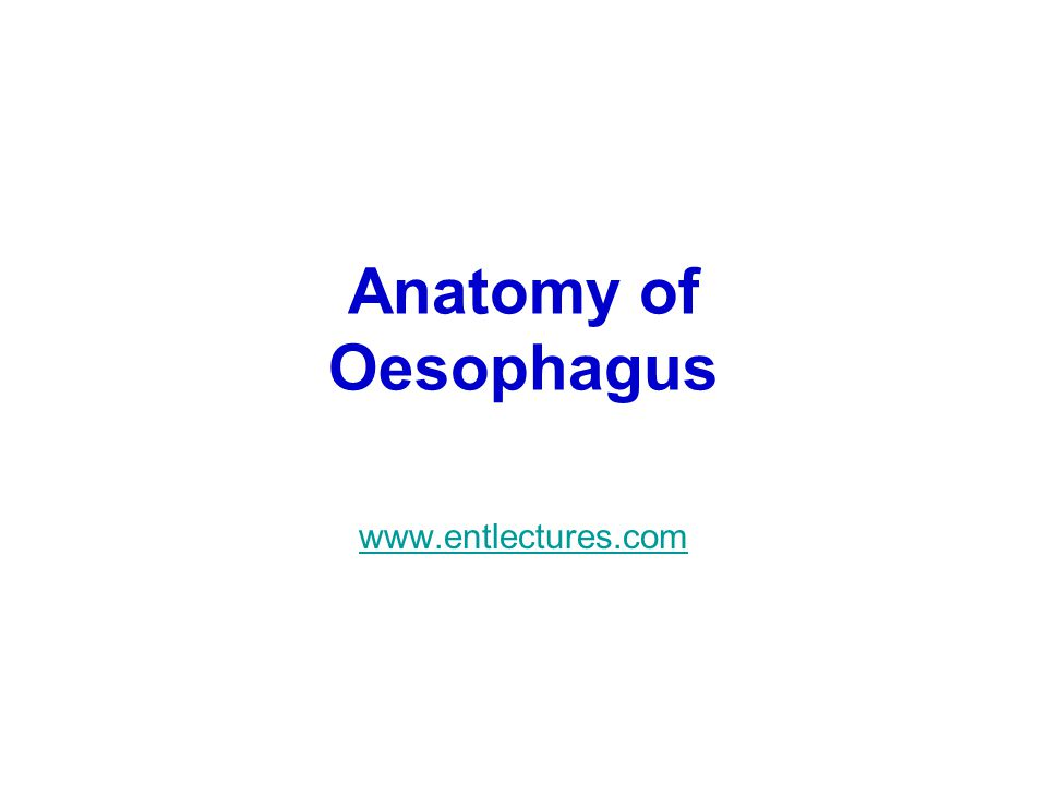 Anatomy of Oesophagus www.entlectures.com