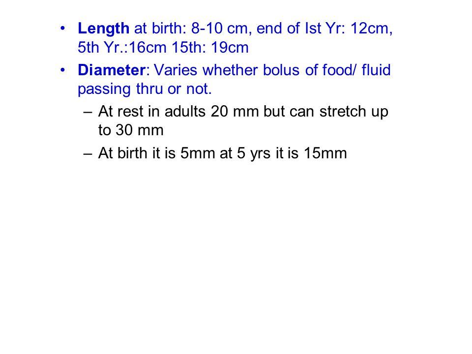 Length at birth: 8-10 cm, end of Ist Yr: 12cm, 5th Yr.:16cm 15th: 19cm