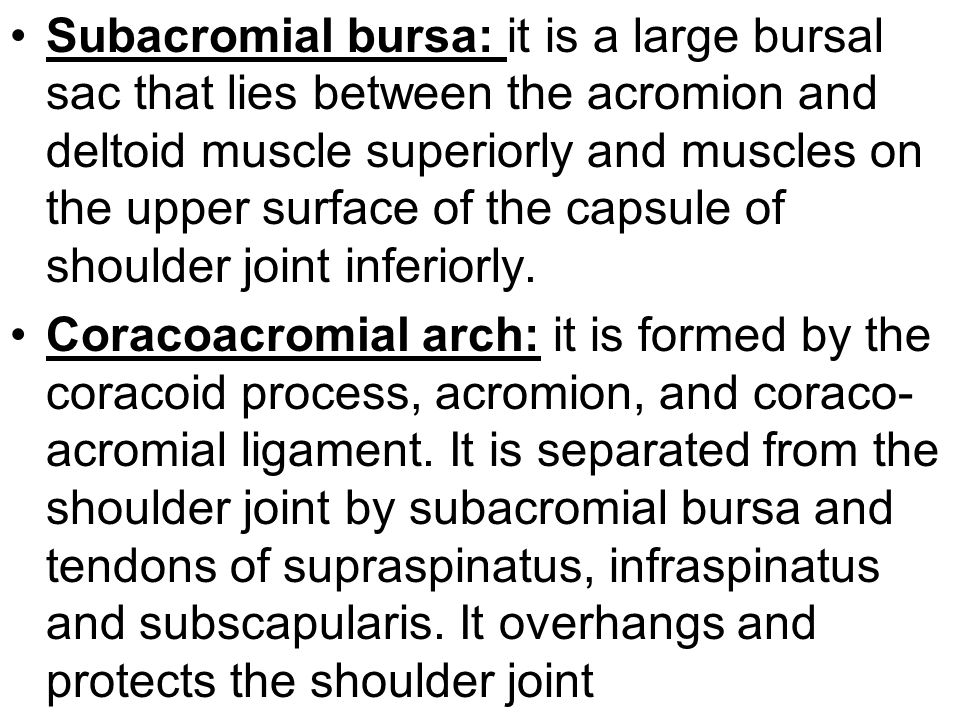 Subacromial bursa: it is a large bursal sac that lies between the acromion and deltoid muscle superiorly and muscles on the upper surface of the capsule of shoulder joint inferiorly.