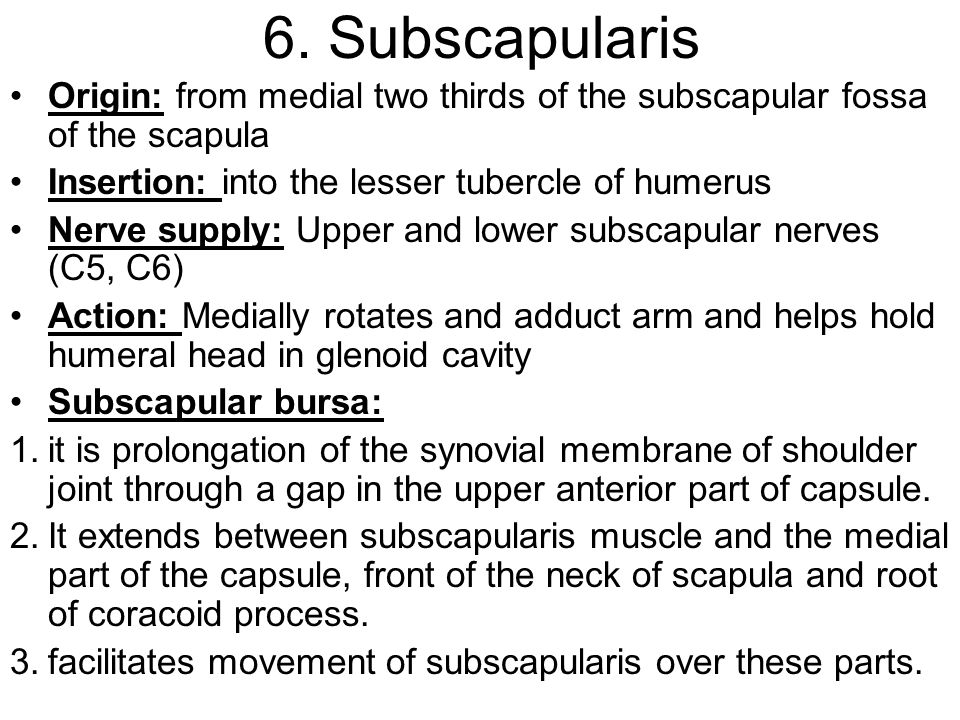 6. Subscapularis Origin: from medial two thirds of the subscapular fossa of the scapula. Insertion: into the lesser tubercle of humerus.