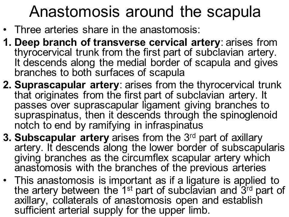 Anastomosis around the scapula