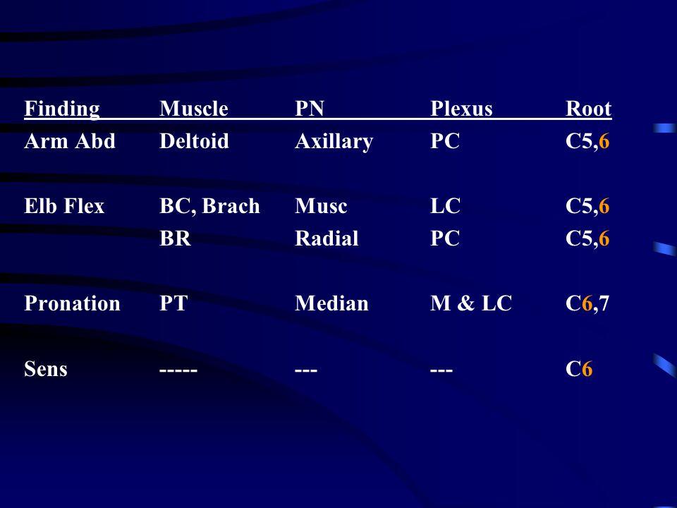 Finding Muscle PN Plexus Root