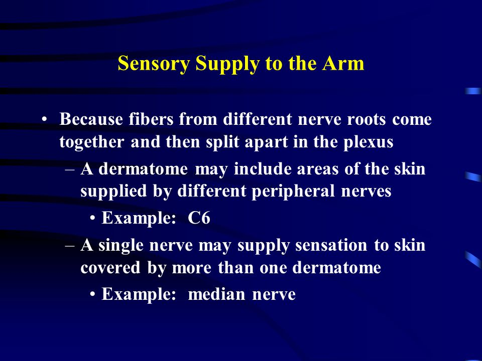 Sensory Supply to the Arm