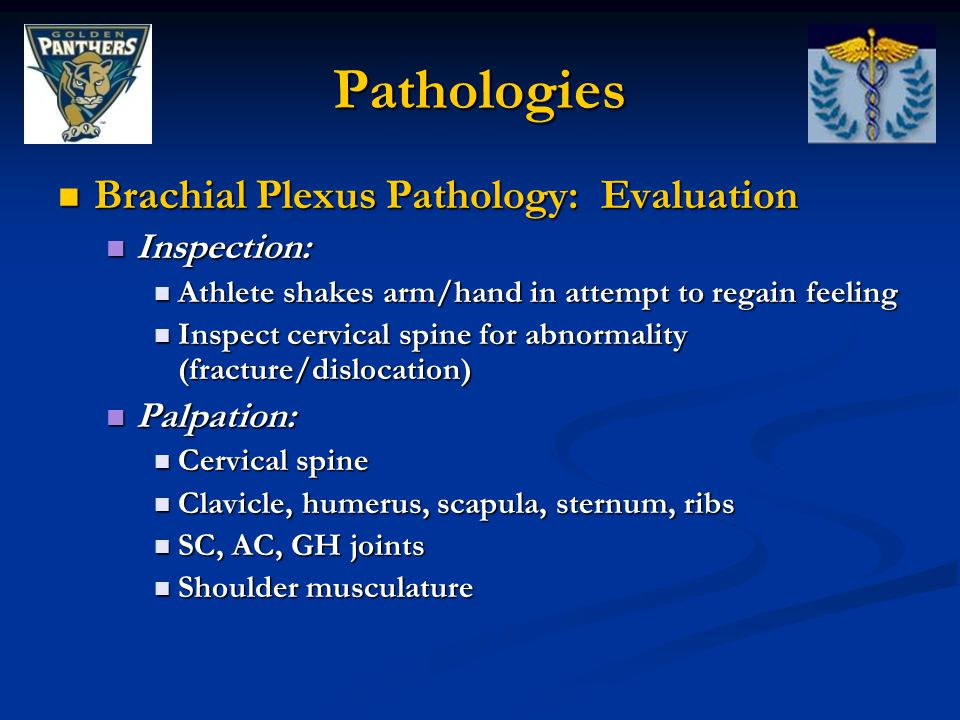 Pathologies Brachial Plexus Pathology: Evaluation Inspection:
