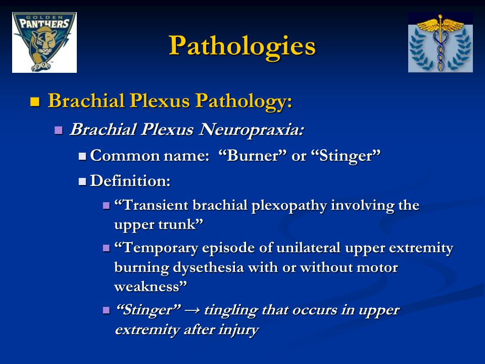 Pathologies Brachial Plexus Pathology: Brachial Plexus Neuropraxia: