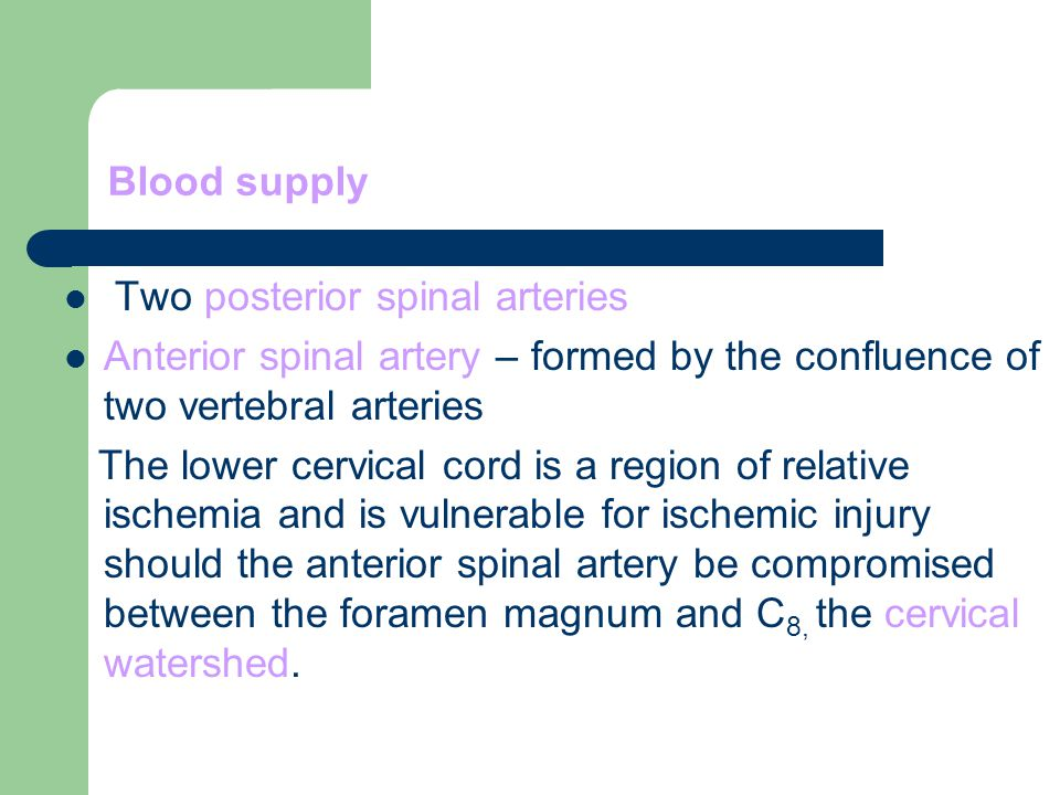 Blood supply Two posterior spinal arteries. Anterior spinal artery – formed by the confluence of two vertebral arteries.