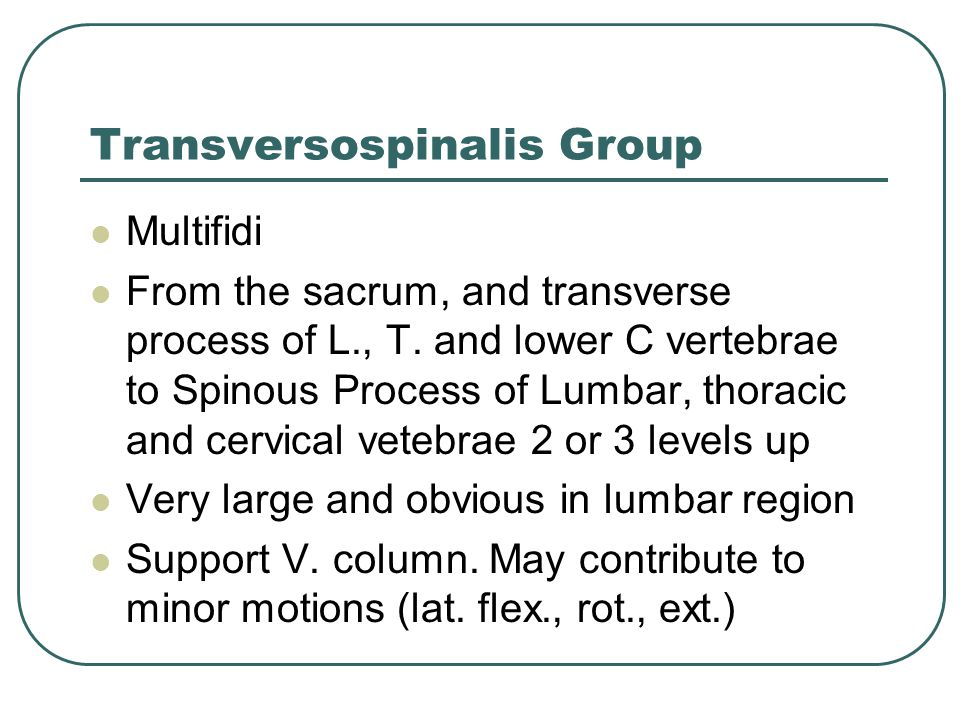 Transversospinalis Group
