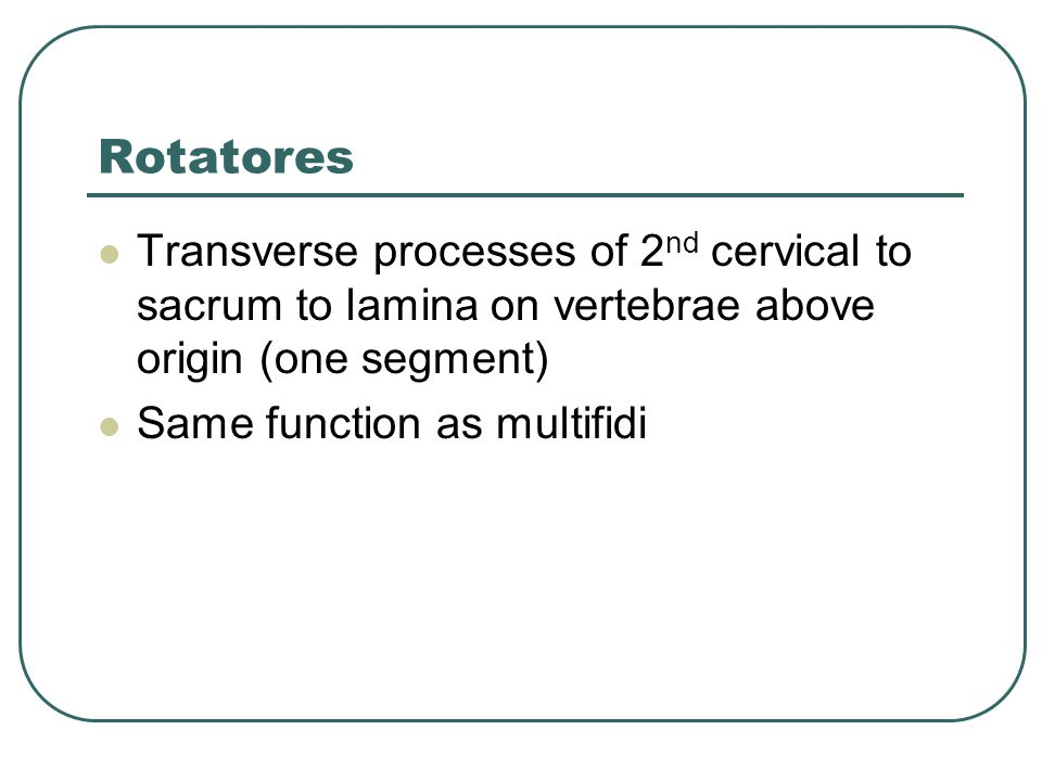 Rotatores Transverse processes of 2nd cervical to sacrum to lamina on vertebrae above origin (one segment)