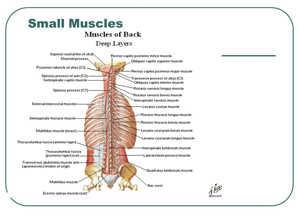 Small Muscles