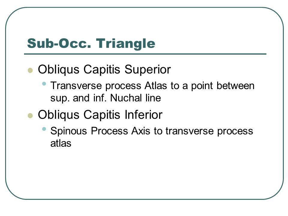 Sub-Occ. Triangle Obliqus Capitis Superior Obliqus Capitis Inferior