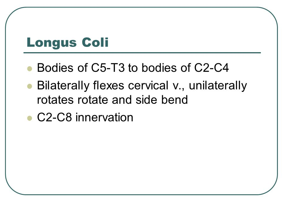 Longus Coli Bodies of C5-T3 to bodies of C2-C4