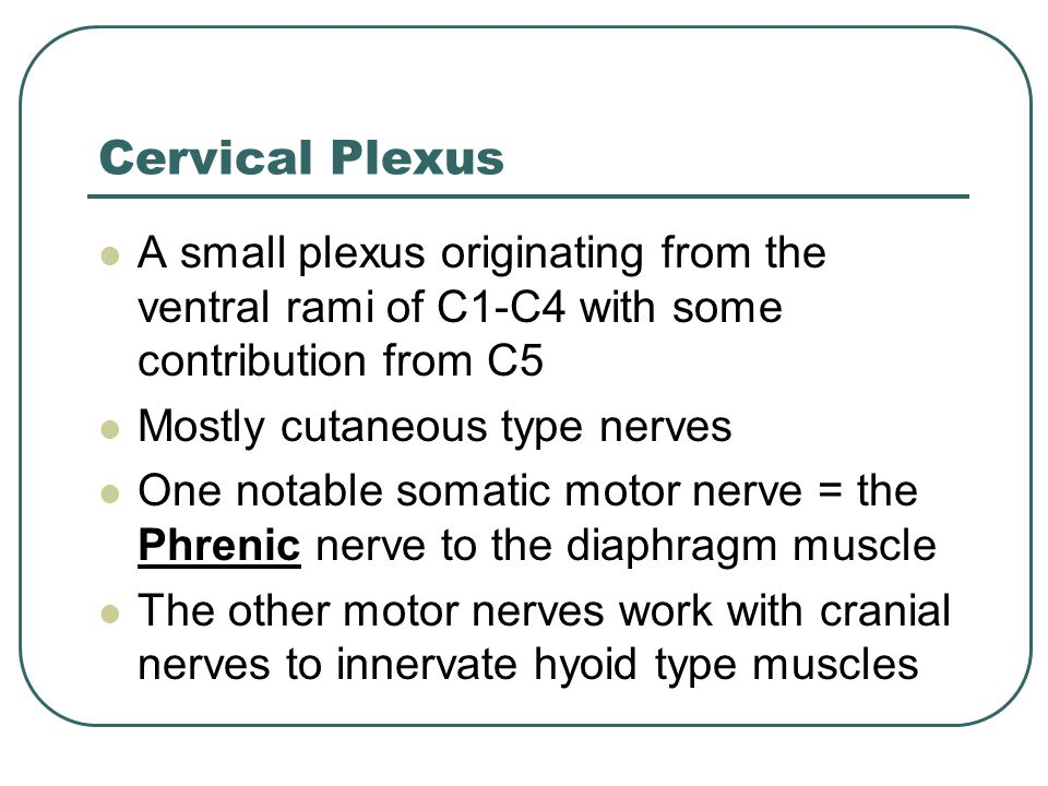 Cervical Plexus A small plexus originating from the ventral rami of C1-C4 with some contribution from C5.