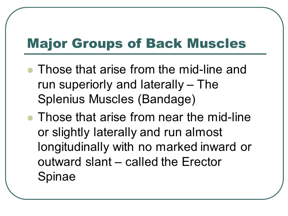 Major Groups of Back Muscles