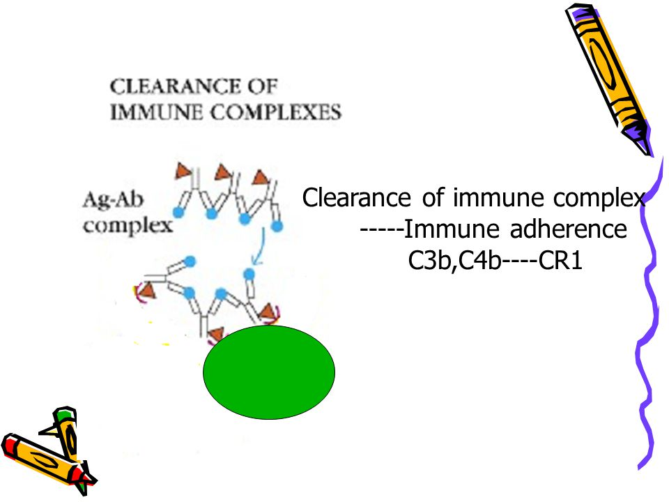 Clearance of immune complex