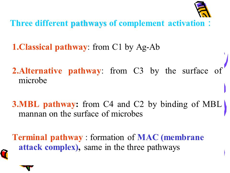 Three different pathways of complement activation: