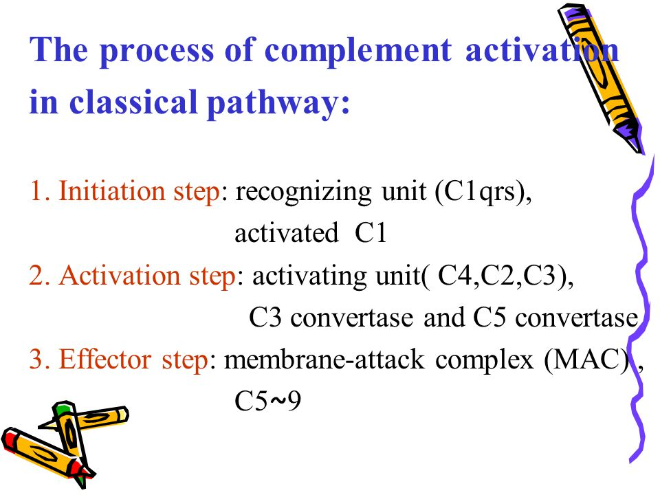 The process of complement activation in classical pathway: