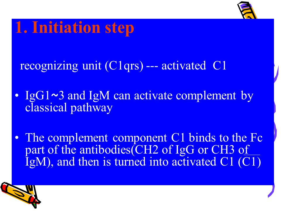 1. Initiation step recognizing unit (C1qrs) --- activated C1. IgG1~3 and IgM can activate complement by classical pathway.