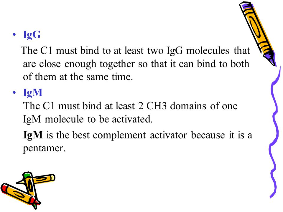 IgG The C1 must bind to at least two IgG molecules that are close enough together so that it can bind to both of them at the same time.