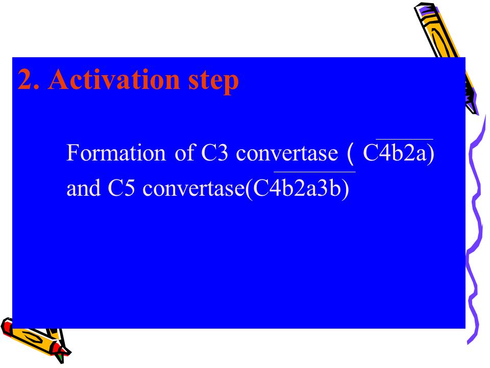 2. Activation step Formation of C3 convertase(C4b2a)