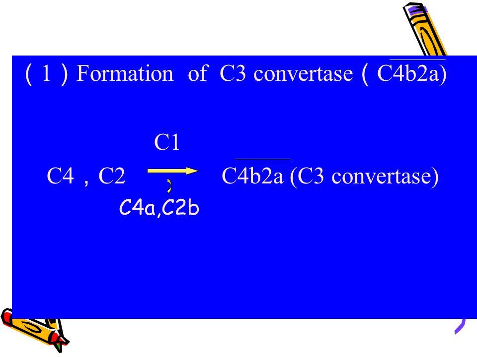 (1)Formation of C3 convertase(C4b2a) C1 C4,C2 C4b2a (C3 convertase)