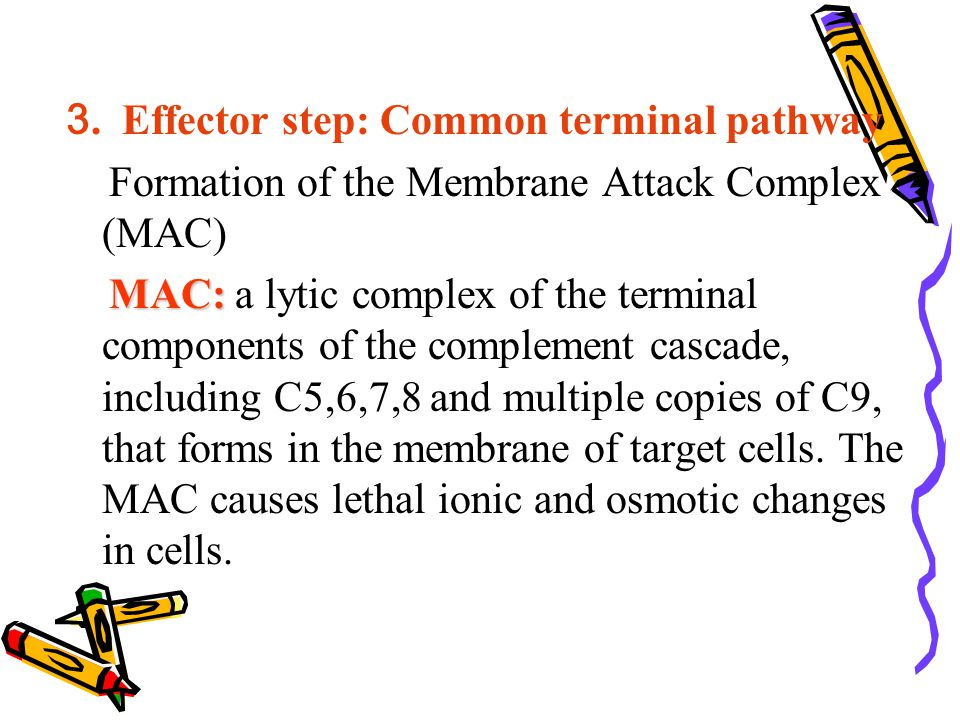 3. Effector step: Common terminal pathway