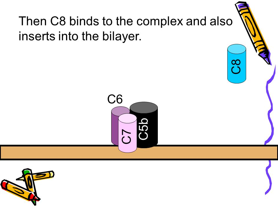 Then C8 binds to the complex and also