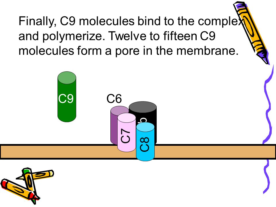 Finally, C9 molecules bind to the complex