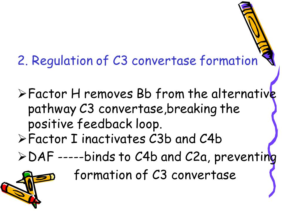 2. Regulation of C3 convertase formation