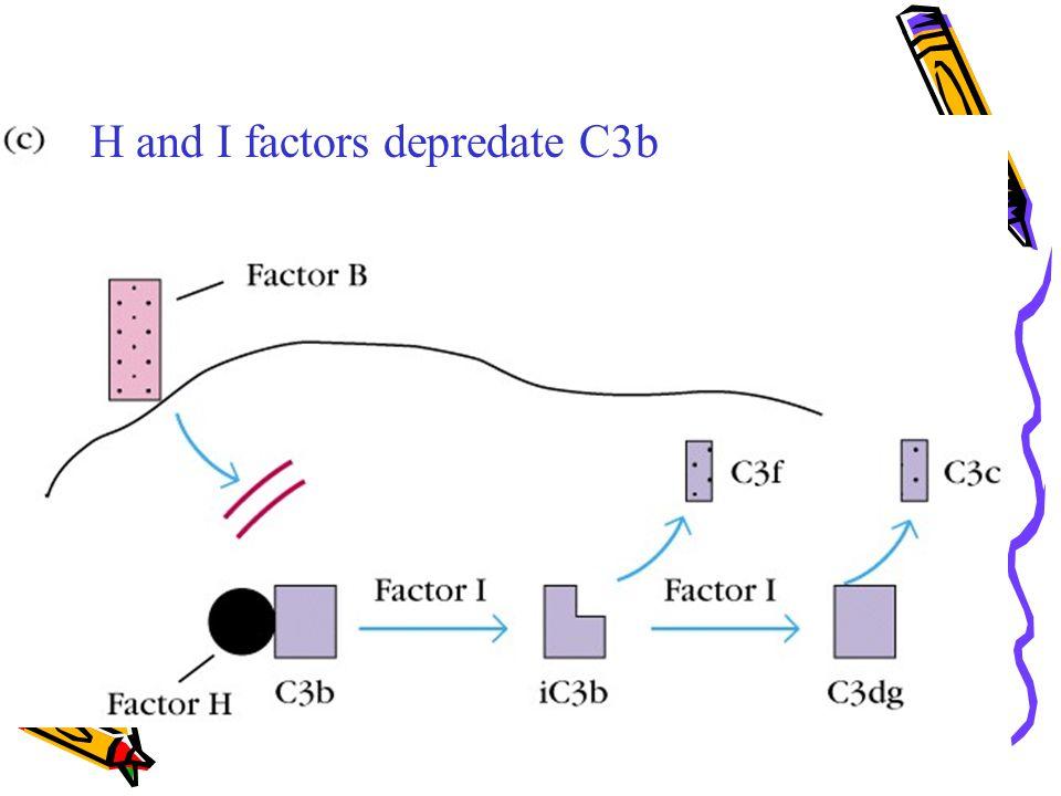 H and I factors depredate C3b