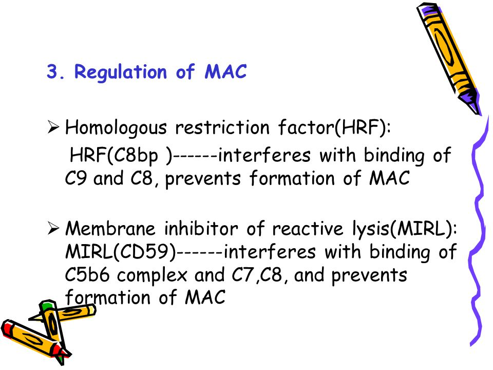 3. Regulation of MAC Homologous restriction factor(HRF): HRF(C8bp )------interferes with binding of C9 and C8, prevents formation of MAC.
