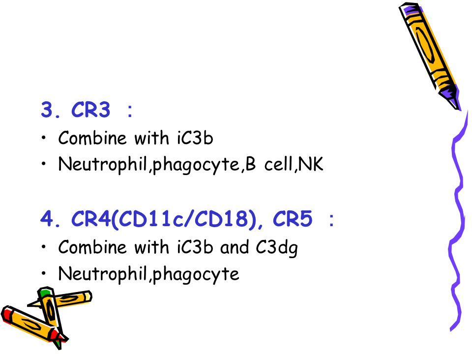 3. CR3 : 4. CR4(CD11c/CD18), CR5 : Combine with iC3b