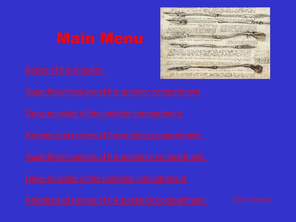 Main Menu Bones of the forearm.