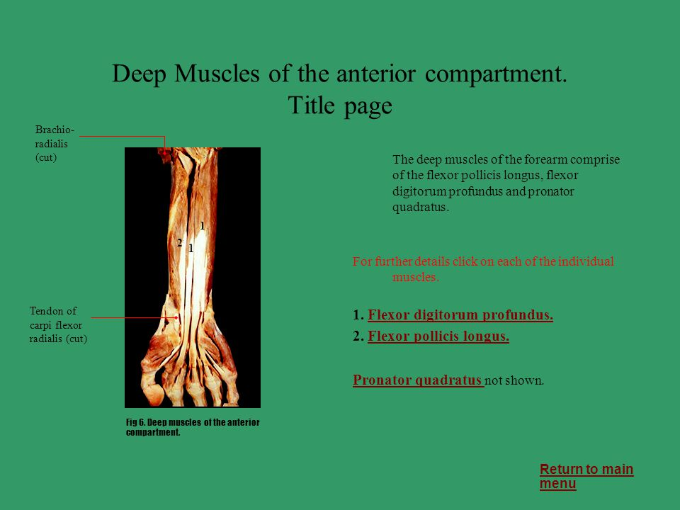 Deep Muscles of the anterior compartment. Title page