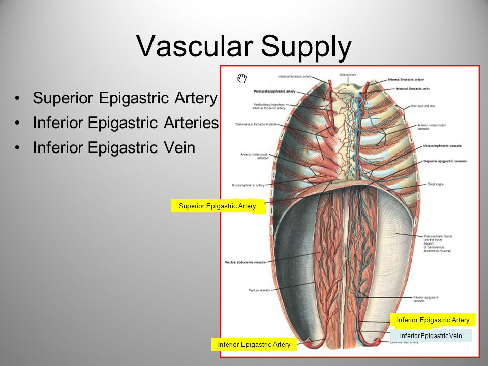 Vascular Supply Superior Epigastric Artery