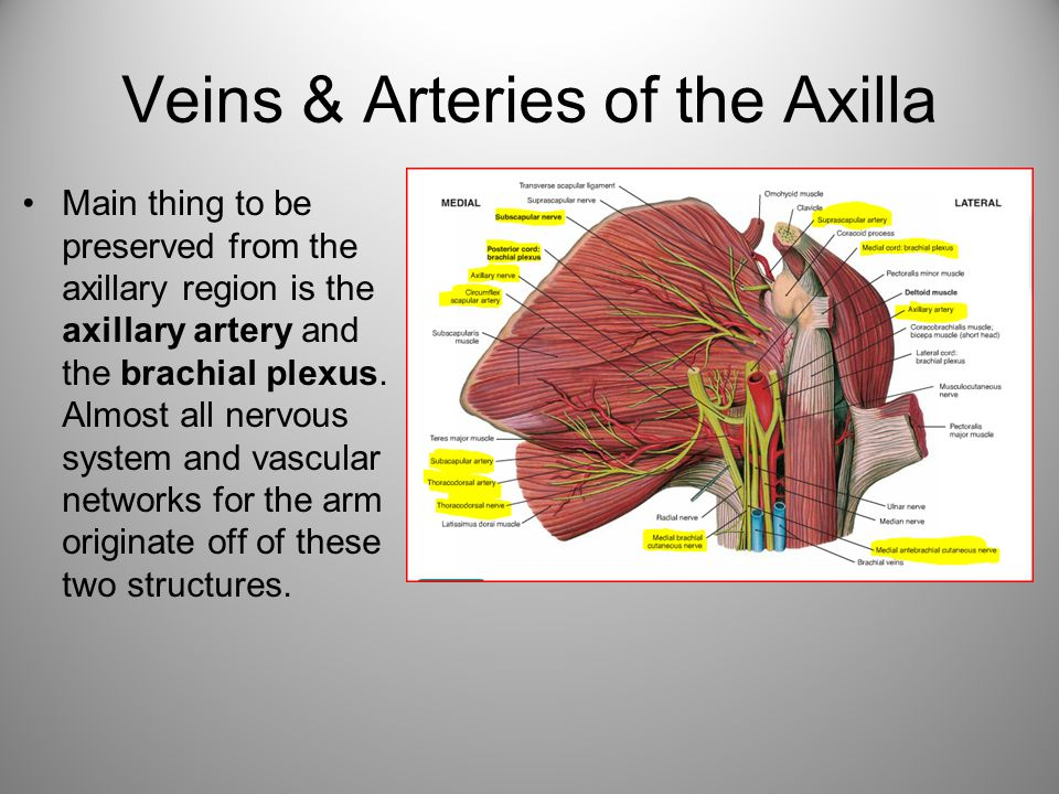 Veins & Arteries of the Axilla