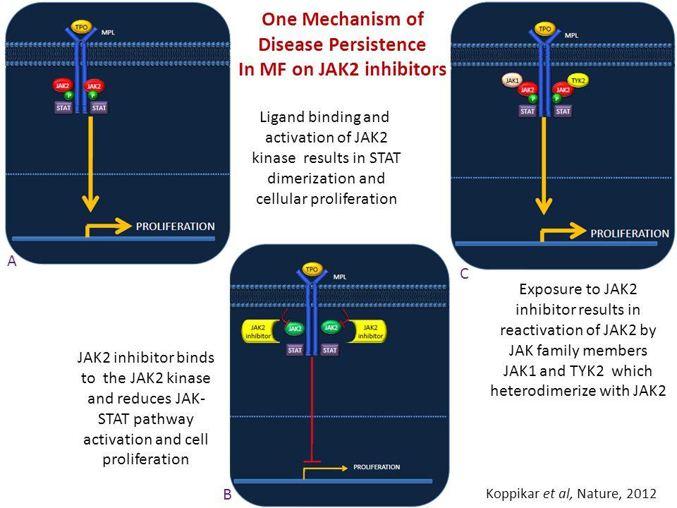 One Mechanism of Disease Persistence In MF on JAK2 inhibitors