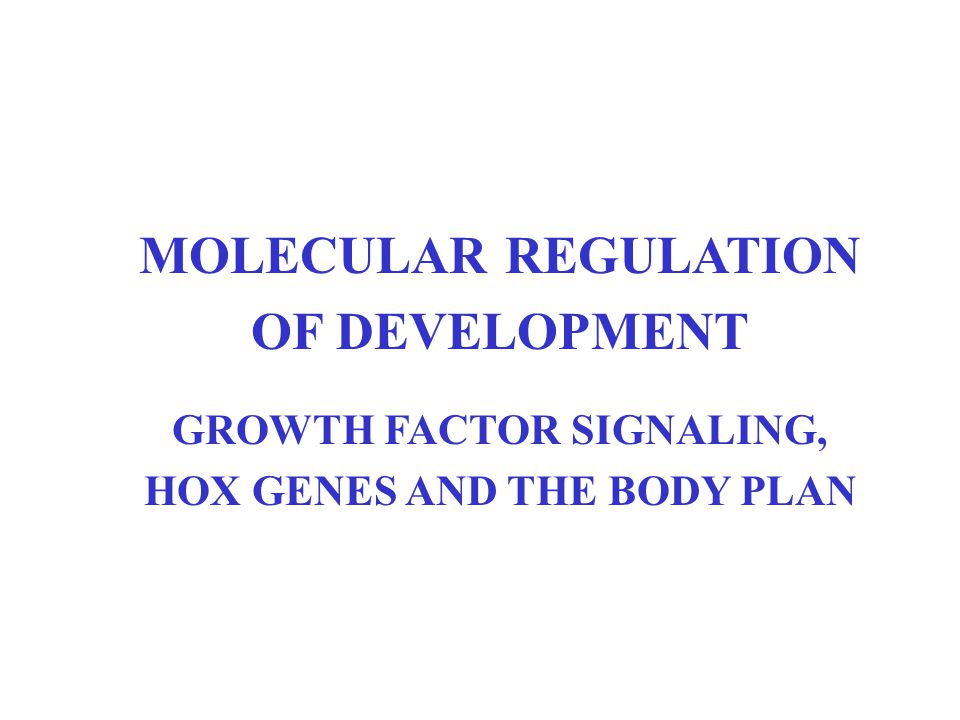 GROWTH FACTOR SIGNALING, HOX GENES AND THE BODY PLAN
