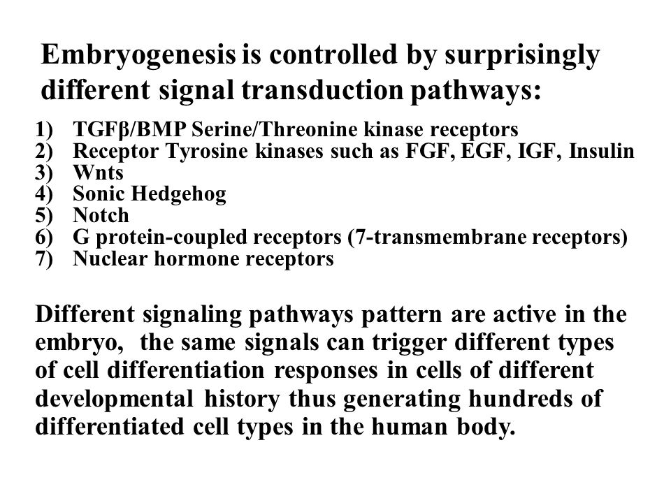 Embryogenesis is controlled by surprisingly different signal transduction pathways: