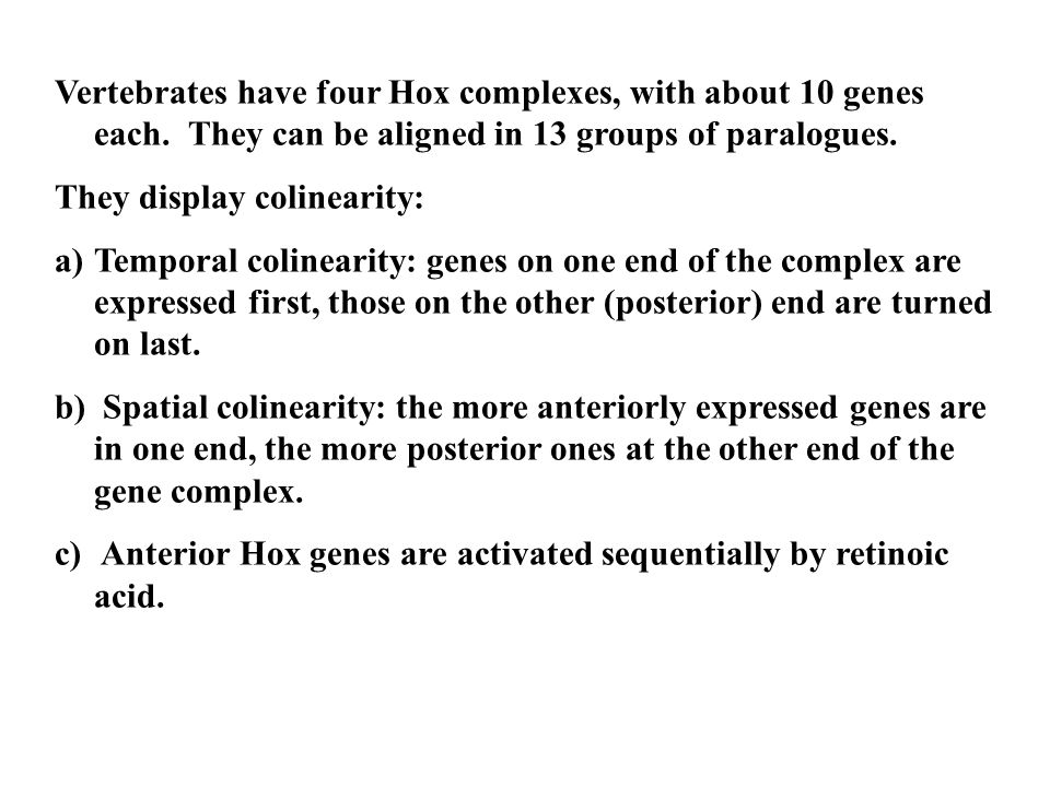 Vertebrates have four Hox complexes, with about 10 genes each