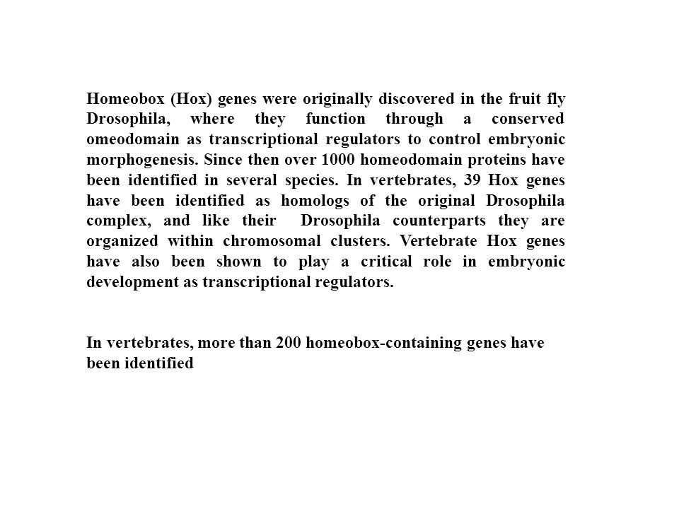 Homeobox (Hox) genes were originally discovered in the fruit fly Drosophila, where they function through a conserved omeodomain as transcriptional regulators to control embryonic morphogenesis. Since then over 1000 homeodomain proteins have been identified in several species. In vertebrates, 39 Hox genes have been identified as homologs of the original Drosophila complex, and like their Drosophila counterparts they are organized within chromosomal clusters. Vertebrate Hox genes have also been shown to play a critical role in embryonic development as transcriptional regulators.