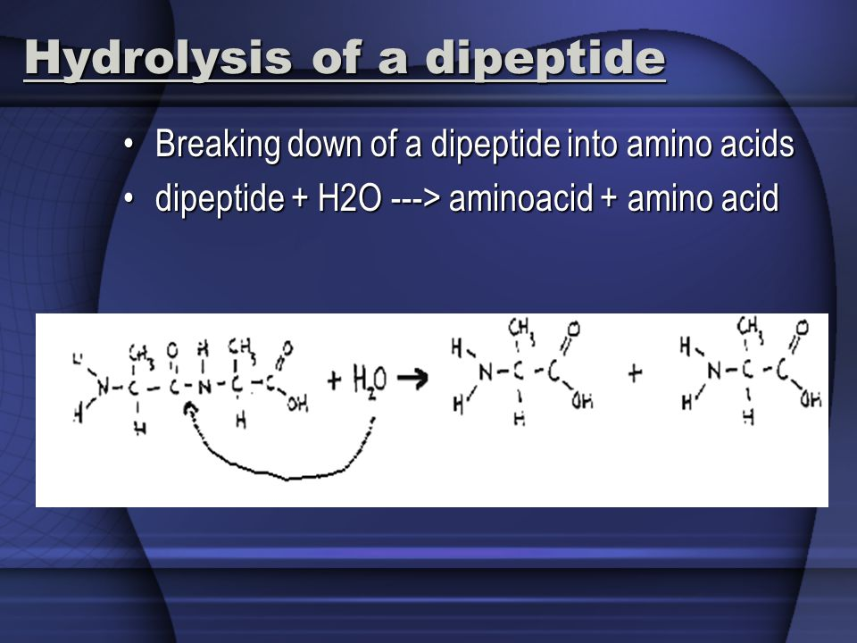 Hydrolysis of a dipeptide