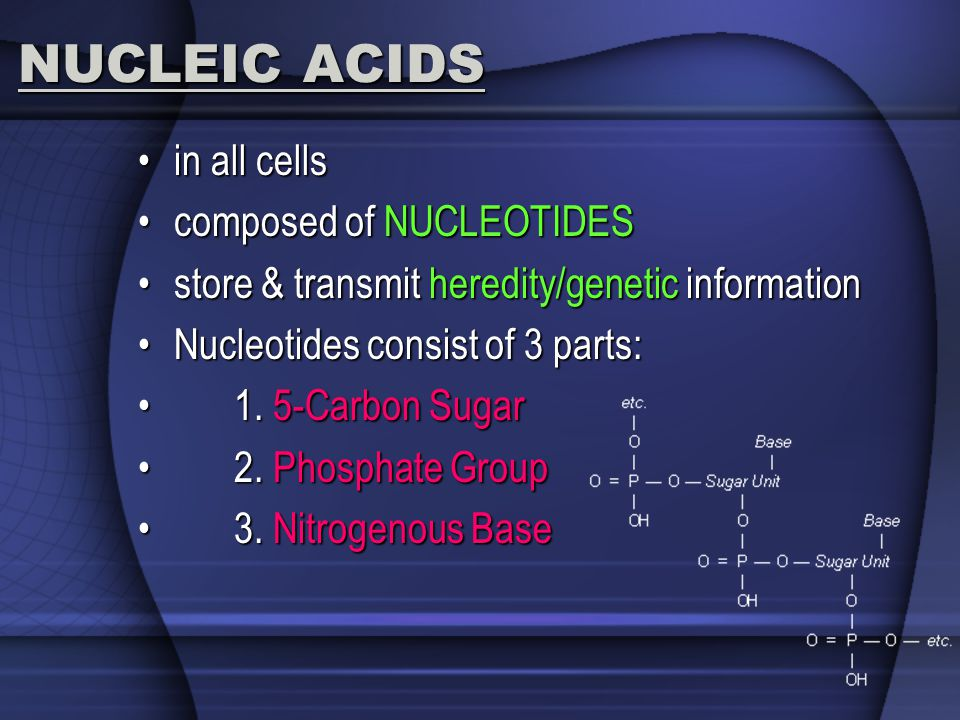 NUCLEIC ACIDS in all cells composed of NUCLEOTIDES