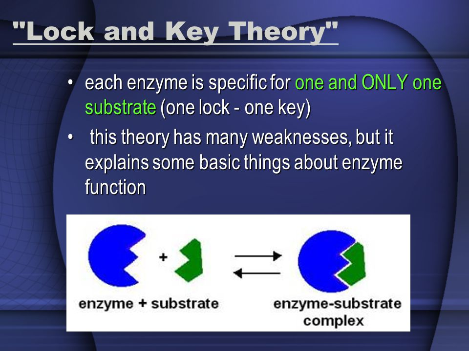 Lock and Key Theory each enzyme is specific for one and ONLY one substrate (one lock - one key)