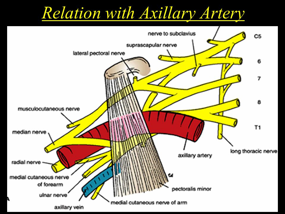 Relation with Axillary Artery