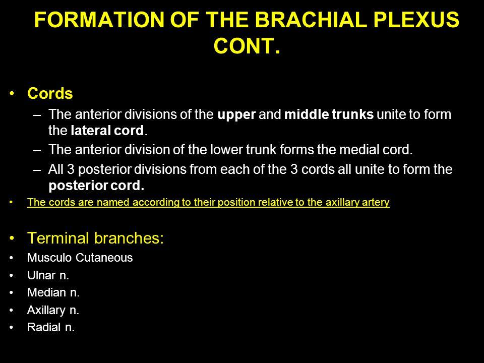 FORMATION OF THE BRACHIAL PLEXUS CONT.