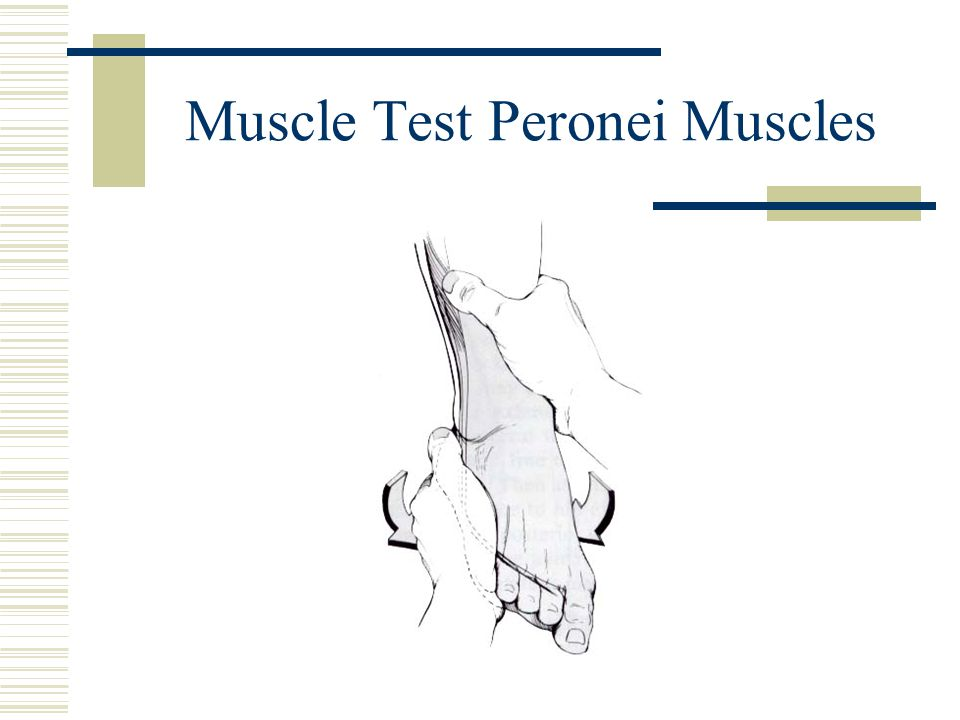 Muscle Test Peronei Muscles