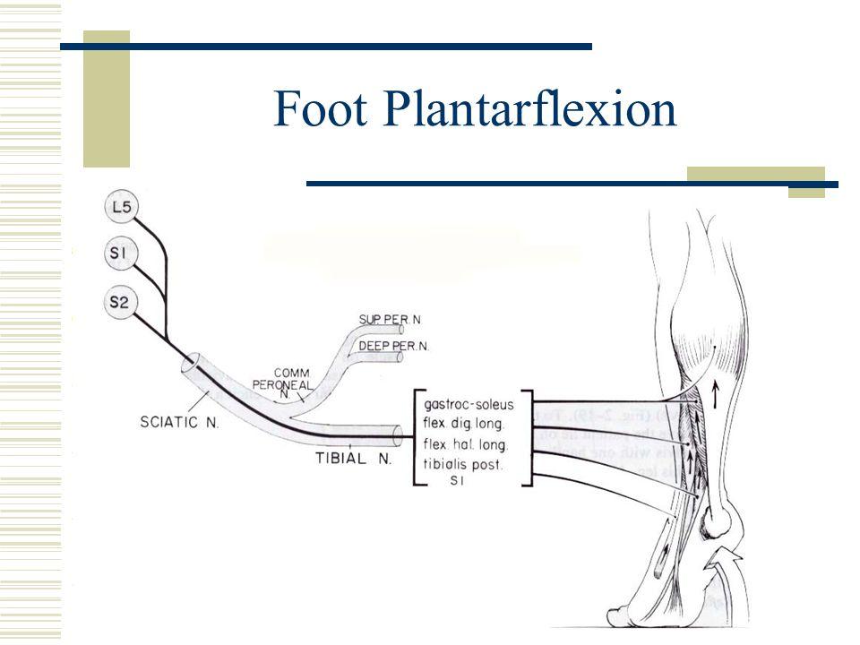 Foot Plantarflexion