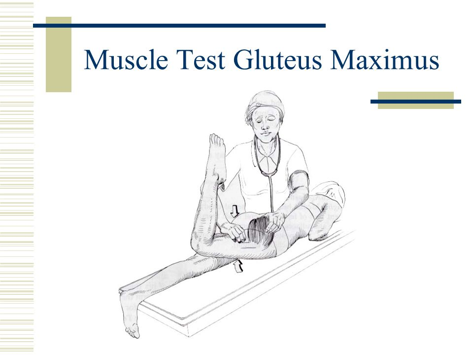 Muscle Test Gluteus Maximus