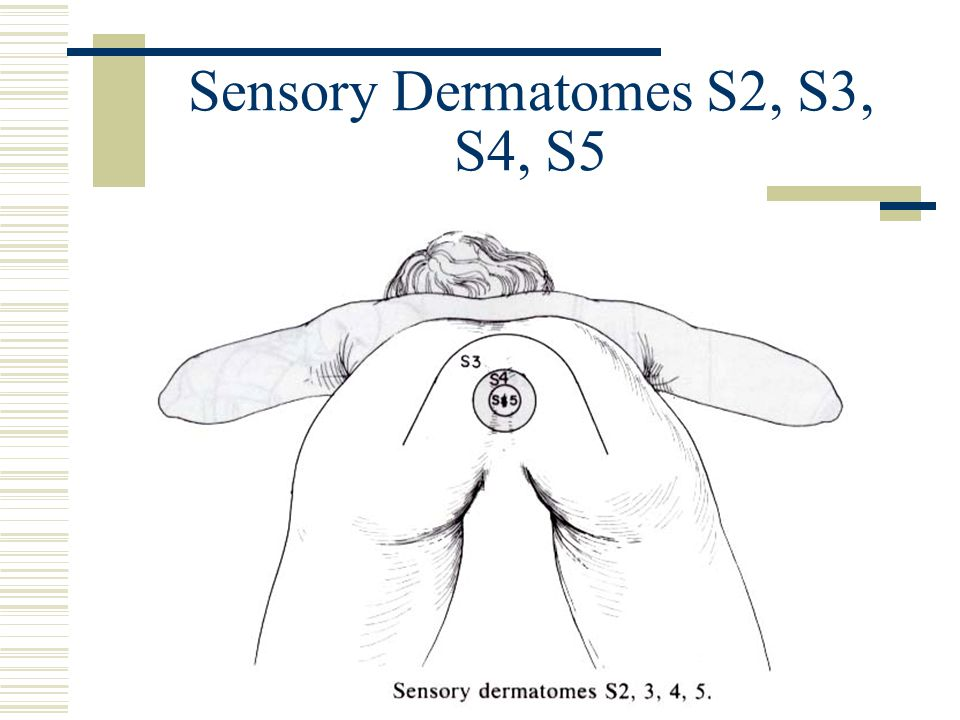 Sensory Dermatomes S2, S3, S4, S5